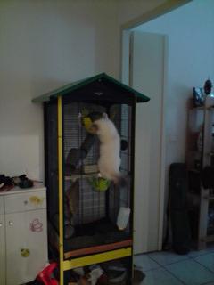 Le nouveau loft des puces, la imac rat prince P0403111