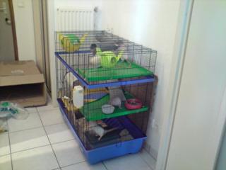 Le nouveau loft des puces, la imac rat prince P1703112