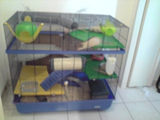 Le nouveau loft des puces, la imac rat prince P1703113