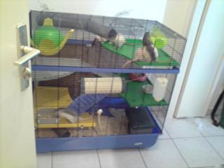 Le nouveau loft des puces, la imac rat prince P1703114