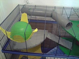 Le nouveau loft des puces, la imac rat prince P1703115