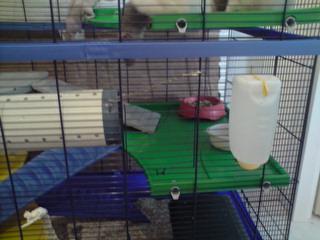 Le nouveau loft des puces, la imac rat prince P1703117