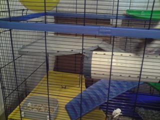 Le nouveau loft des puces, la imac rat prince P1703118