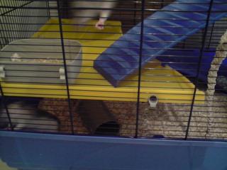 Le nouveau loft des puces, la imac rat prince P1703119