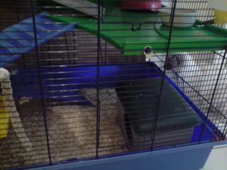 Le nouveau loft des puces, la imac rat prince P1703120