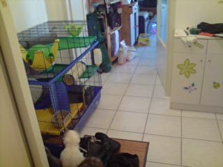 Le nouveau loft des puces, la imac rat prince P1803110