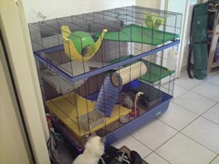 Le nouveau loft des puces, la imac rat prince P1803111