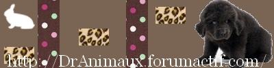 DrAnimaux forum chaleureux garanti Bannie10