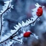 Protection des vegetaux contre le froid Plante10
