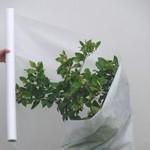 Protection des vegetaux contre le froid Plante11