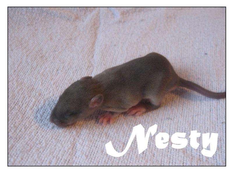 nesty12.jpg