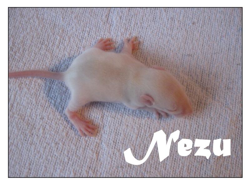 nezu12.jpg