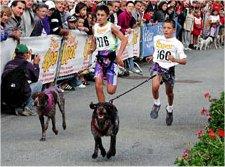 Le cani-cross Cani-c11