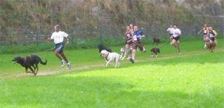 Le cani-cross Cani-c12