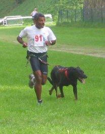 Le cani-cross Cani-c15