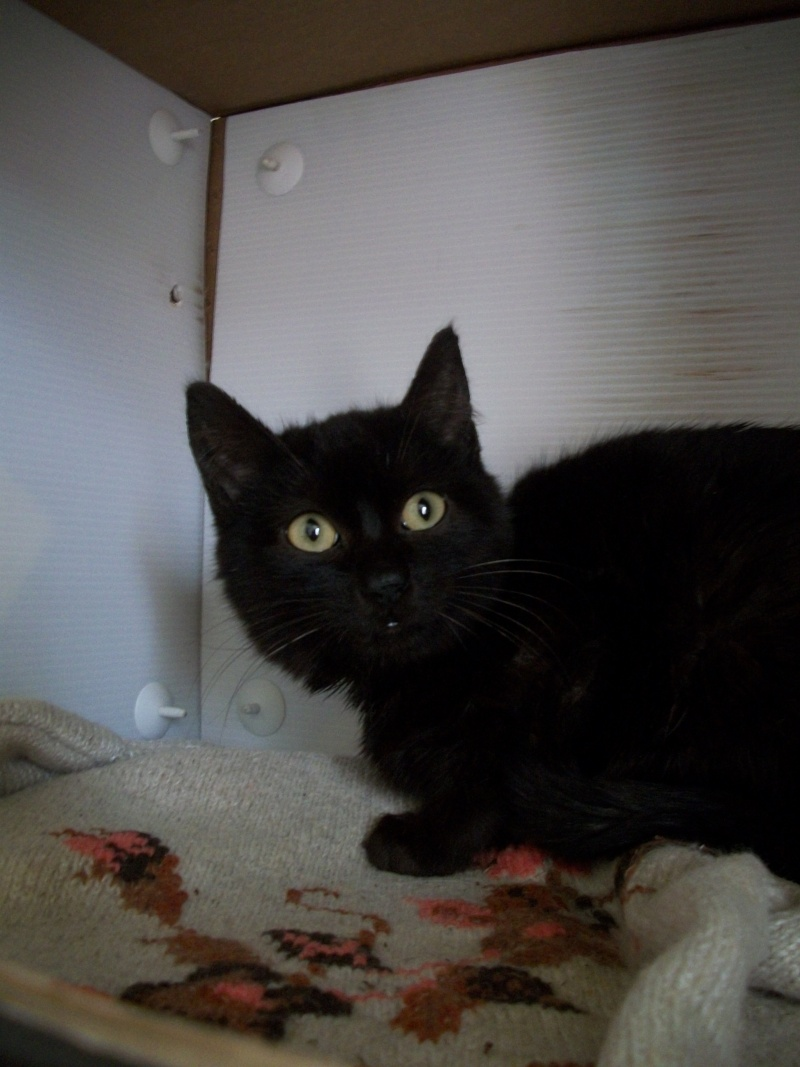Salem (chaton noir) 00613