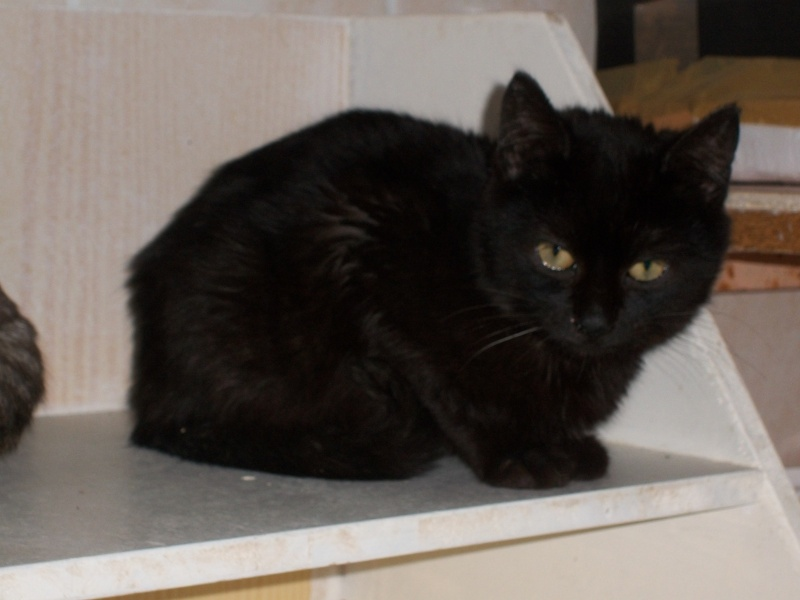 Salem (chaton noir) 02512
