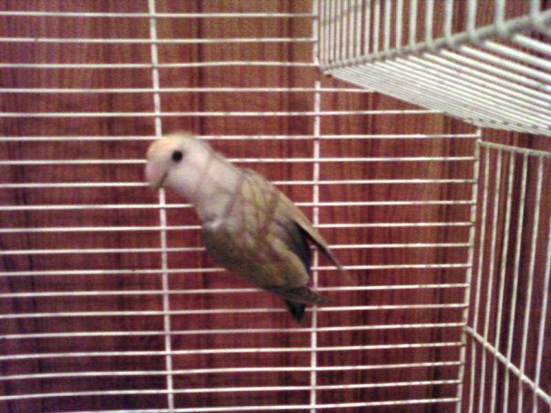 2 autres de mes oiseaux Photo010