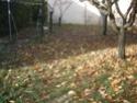 Petite recherche dans le jardin Dsc00216