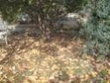 Petite recherche dans le jardin Dsc00217
