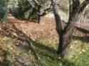 Petite recherche dans le jardin Dsc00218