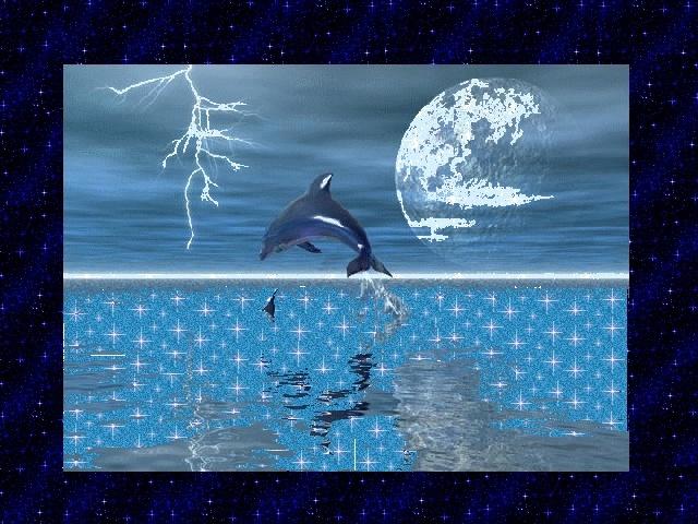 dauphins 6jvll411