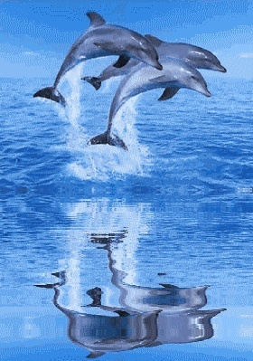 dauphins Dauphi11