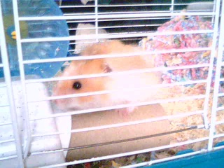 Introducing My Hamster 2009-013