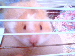 Introducing My Hamster 2009-014