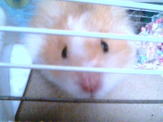 Introducing My Hamster 2009-015