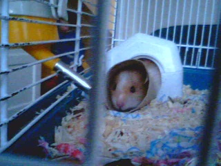 Introducing My Hamster 2009-016