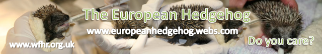 My Videos: Feeding Hedgehogs Banner10