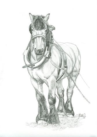 dessin cheval de trait Traitp10