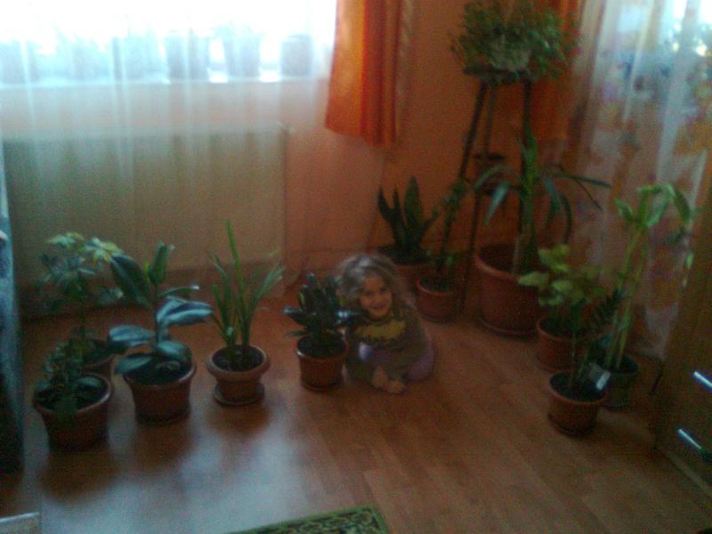 poze cu plantele mele de ghiveci ! - Pagina 18 Imagi186