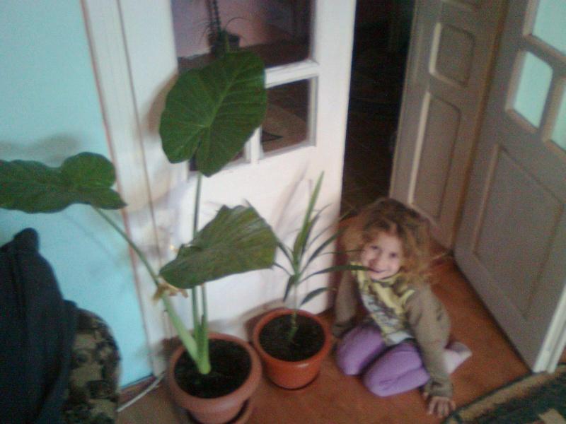 poze cu plantele mele de ghiveci ! - Pagina 18 Imagi187