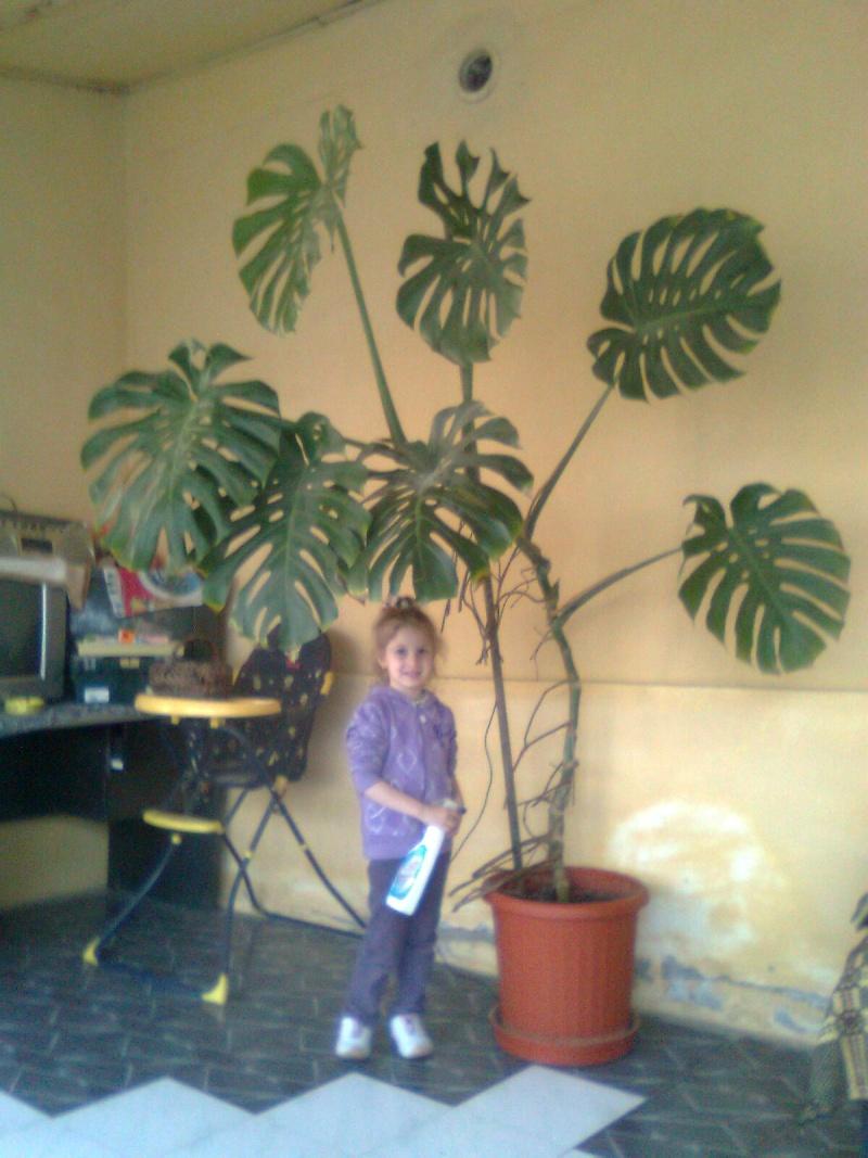 poze cu plantele mele de ghiveci ! - Pagina 18 Imagi191