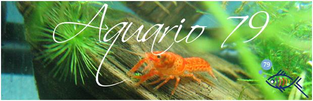 www.aquario79.com : Eau douce, Eau de mer, Aquaterrario, Jardins aquatiques