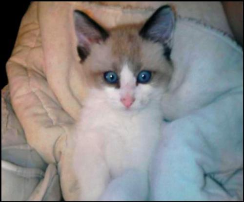 """Concours photos """"Les chats"""" du 3 février au 10 février - Page 2 Alla_t10"""