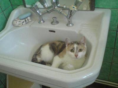 """Concours photos """"Les chats"""" du 3 février au 10 février - Page 3 Propre10"""