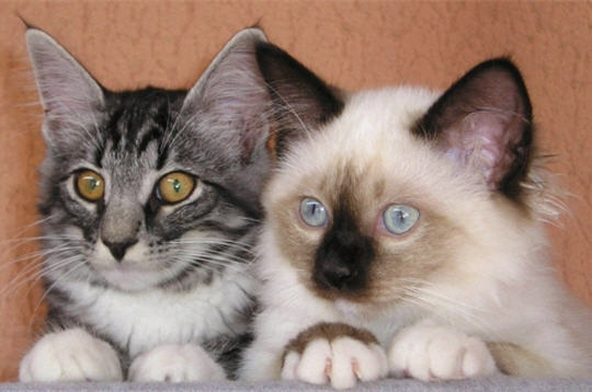 """Concours photos """"Les chats"""" du 3 février au 10 février - Page 3 Vois-t10"""