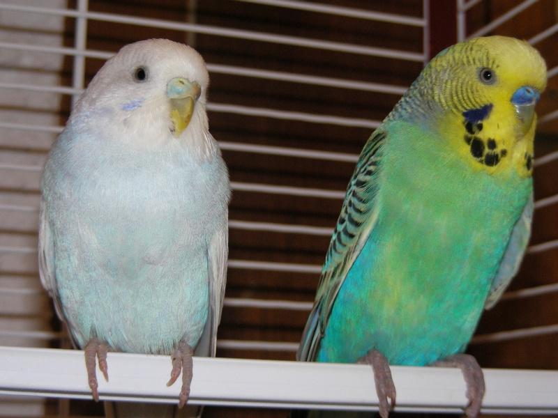 Voici Lily & Coco Sany0316