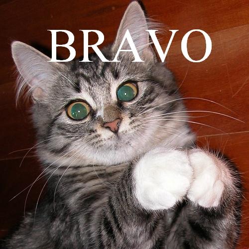 gymnastique masculine Bravo10