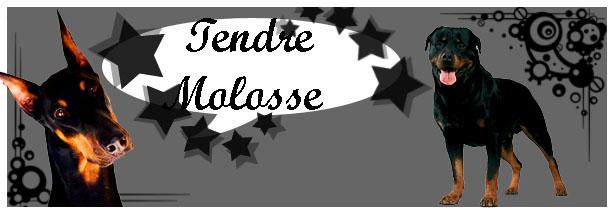 Tendre Molosse