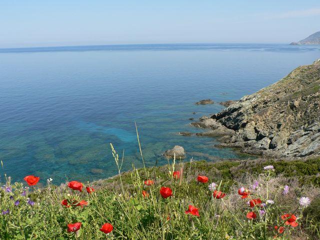 Le Cap Corse fleuri en Mai P1090410