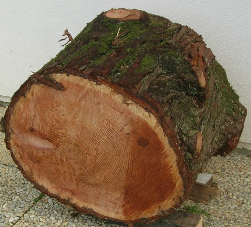 Que pensez-vous de ces bois pour sculpter ? - Page 2 Dscn8010