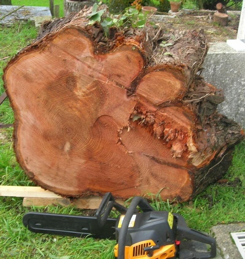 Que pensez-vous de ces bois pour sculpter ? - Page 2 Dscn8011