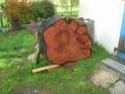 Que pensez-vous de ces bois pour sculpter ? - Page 2 Dscn8015