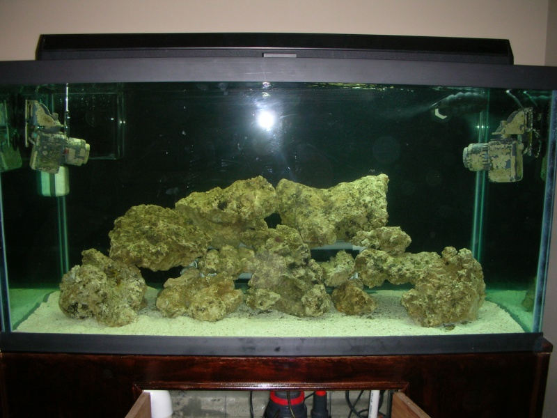 Derek's 90 gal. reef build New_ta19