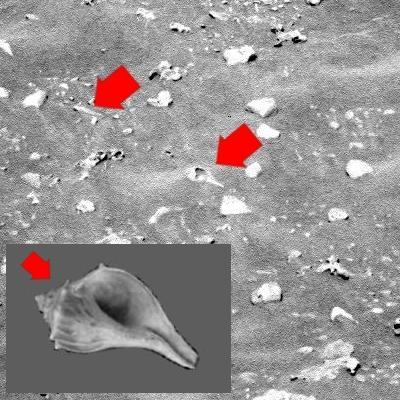 Marte e i suoi misteri (Astronomia: Video + Immagini) Conchi10