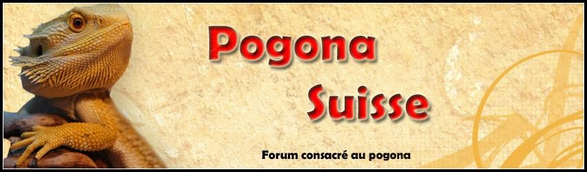 Pogona Suisse